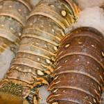 """lobster tails"" by CapturedMoments"