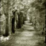 """""""Forest Path"""" by cthoward"""