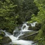 """lush falls"" by cthoward"