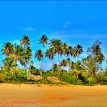 """Beach and Palms"" by FB-PHOTO"