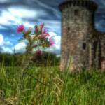 """Caerlaverock Castle Thistle"" by dawilson"