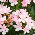 """""""Blooms de Pink"""" by dsphotocomp"""