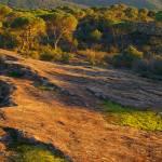 """Sunset light on La Plaine des Maures - Provence"" by frenchlandscapes"