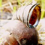 """alien shell"" by LoraxLady"