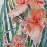 """""""Peach Iris"""" by MannellGallery"""