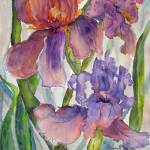"""Rusty-Mauve Iris"" by MannellGallery"