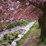 """""""Springtime"""" by FifePhotographer"""