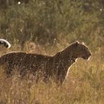 """""""leopard 04"""" by DezineZone"""