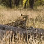 """""""leopard 09"""" by DezineZone"""