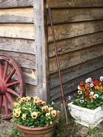Country Cottage Flowers