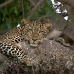 """""""mara leopard 02"""" by DezineZone"""