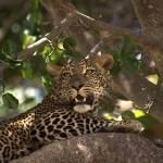 """""""mara leopard"""" by DezineZone"""