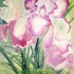 """""""Violet Iris"""" by MannellGallery"""
