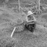 """""""Farmer"""" by Kahealani"""