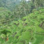 """Terraced Rice Paddies near Ubud"" by Kahealani"