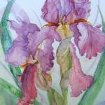 """New Mauve Iris"" by MannellGallery"