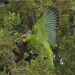 """""""Purest Green"""" by parrots"""