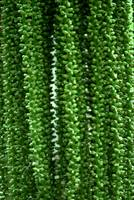 Green palm beads