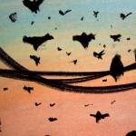 """""""Crows"""" by StephenGentry"""