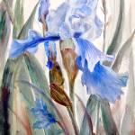 """""""Blue Iris II"""" by MannellGallery"""
