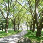 """""""Stanley Park"""" by elsief1"""