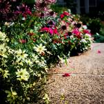 """Flower Path"" by EricaJoy"