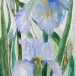 """""""Blue Iris III"""" by MannellGallery"""