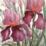 """Cranberry Iris"" by MannellGallery"