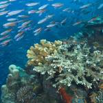 """Reef Scenic, Andaman Islands - 15feb07or170"" by markstrickland"