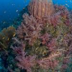 """Reef Scenic, Andaman Islands - 17FEB07rsand074"" by markstrickland"