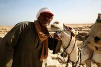 Camel Affection