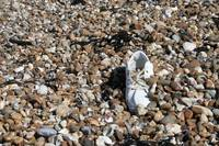 Shoe, Hayling Island