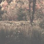 """my wild marshland in bloom…!!!"" by Woodsman"
