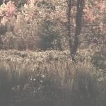 """my wild marshland in bloom!!!"" by Woodsman"