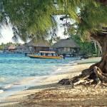"""Big Tree on Bora Bora"" by kostliva"