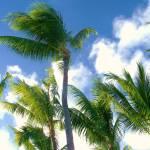 """""""Palms on Tahiti"""" by kostliva"""
