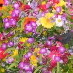 """Beautiful  Flowers"" by frankjadorna"