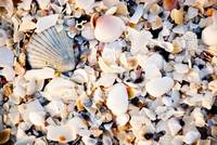 She sells sea shells by the sea shore