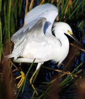 Egret Two Step