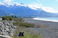 Relaxing at the Beach, Kaikoura, NZ