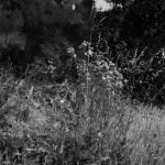 """Meadow"" by GregWoodhouse"
