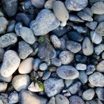 """Rocks at Golden Gardens"" by scgotts"