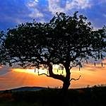 """Sunset in Samburu, Kenya"" by stockphotos"
