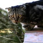 """Gato"" by carfe_60"