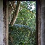 """Looking into the Jungle"" by KeithKelly"
