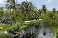 Cayman Islands: Botanic Park Pond