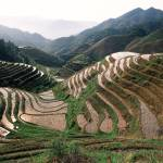 """Paddy topography Longji Rice Terraces"" by johnmacdonald"