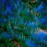 """""""Bird Blue 1"""" by kenart"""