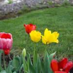 """""""Flowerz"""" by jonsmelquist"""