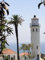 Lighthouse & Palm